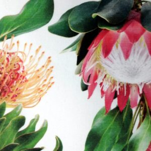 Table-Runner -Pincushion Red Protea
